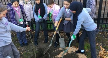 EGA Community Orchard